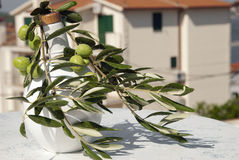 Olive branch Royalty Free Stock Images