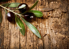 Olive Branch. Over Wood background Stock Photography