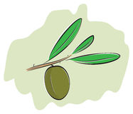 Olive on branch Stock Photography