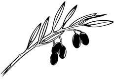 Olive branch. Black and white realistic vector outline royalty free illustration