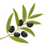 Olive branch royalty free illustration