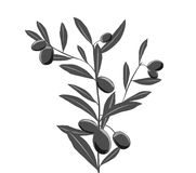 Olive branch. Olive and branch  illustration Royalty Free Stock Photos