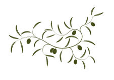 Olive branch. Vector illustration of simple Olive branch three with green olives royalty free illustration