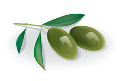 Olive branch vector illustration
