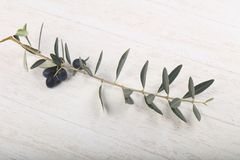 Olive branch. With berries over wooden background Royalty Free Stock Photo