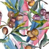 Olive branch with black and green fruit. Watercolor background illustration set. Seamless background pattern. vector illustration