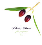 Olive branch border Royalty Free Stock Images