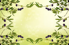 Olive branch card Stock Photos