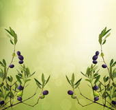 Olive branch card Stock Photo