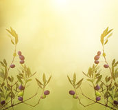 Olive branch card Stock Images