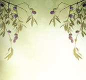 Olive branch card Royalty Free Stock Photography