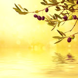 Olive branch card Stock Photography