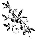 Olive branch. Colorful olive branch, kitchen design element stock illustration