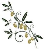 Olive branch. Colorful olive branch, kitchen design element vector illustration