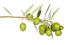 Olive branch. With green olives isolated on white Stock Photography