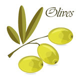 Olive branch with green olives on a white background isolated Royalty Free Stock Images