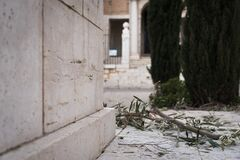 Olive branch on the ground during the religious celebration of Holy Week in Colmenar de Oreja, Spain