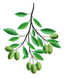 Olive Branch illustration Stock Images