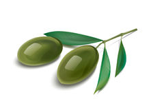 Olive branch Illustration Royalty Free Stock Image