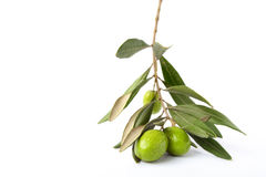 Olive branch. Isolated green olive branch on white background Stock Photography