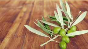 Olive Branch. Olive Leaf Branch Food Green Studio Shot Royalty Free Stock Photos