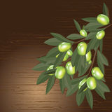 Olive branch with leaves Royalty Free Stock Photography