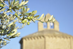 Olive branch (Olea europaea) and romanesque hermit Royalty Free Stock Photo