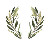 Olive branch. Isolated in white background showing olive wreath and the United Nations Flag The symbol of the UN is a map of the world surrounded by es. The map royalty free illustration