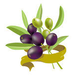 Olive branch with ribbon Stock Photography