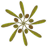 Olive branch rosette drawing Stock Image