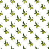 Olive branch seamless pattern. Natural background Design with olives for olive oil or cosmetics products, vector illustration Royalty Free Stock Photo