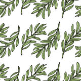 Olive branch seamless pattern. White background. Vector illustration Royalty Free Stock Photos