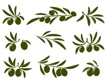 Olive branch set Stock Photography