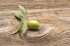 Olive Branch sopra fondo di legno Fotografie Stock Libere da Diritti
