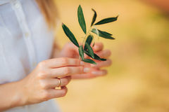 Olive branch in tender female hands Stock Photography