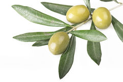 Olive branch. With three olives on the white Stock Photos