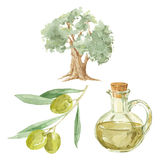 Olive branch,  tree  and a bottle of olive oil drawing by waterc Royalty Free Stock Photo