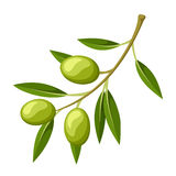 Olive branch. Vector illustration. Royalty Free Stock Photo