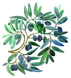 Olive branches stock illustration