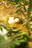 Olive branches Royalty Free Stock Photography
