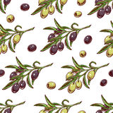 Olive Branches Imagens de Stock