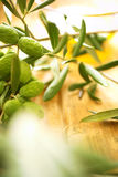 Olive branches Stock Image