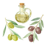 Olive branches and a bottle of olive oil drawing by watercolor. Bottle of olive oil and two branches of the olive. Vector illustration, elements for design vector illustration