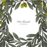 Olive branches and green olives frame on white background. Stock Photos