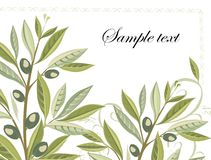 Olive branches in grunge style - easy to modify Royalty Free Stock Photo