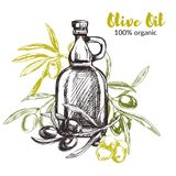 Olive branches, hand drawn retro style vector illustrations. Royalty Free Stock Images