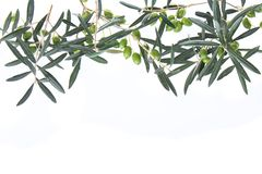 Olive branches hanging down from above. Green olives with leaves. Copy space. stock photo