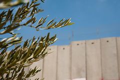Olive Branches and Israeli Separation Barrier. BETHLEHEM, OCCUPIED PALESTINIAN TERRITORIES - The branches of an olive tree frame the Israeli separation wall in Stock Photography