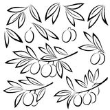 Olive Branches Leaves and Berries Stock Photo