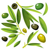 Olive Branches with Olives green and black Royalty Free Stock Photography